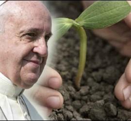 El Papa y la creación