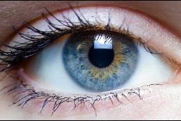 Visión, ojo, inteligencia.