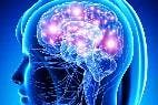 Lo 'emocionante' para el investigador es que el descubrimiento implica que 'potencialmente' los recuerdos borrados puedan ser 'reactivados'