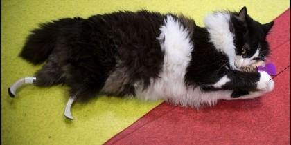 Pooh, el primer 'gato biónico'