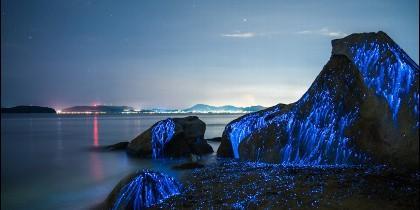Camarones bioluminiscentes