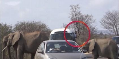 El hombre aplastado por un elefante