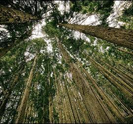 Ecología y espiritualidad