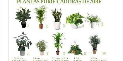 Plantas putificadoras del aire.