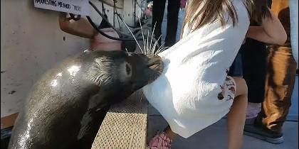 El momento en que lobo marino ataca a la niña.