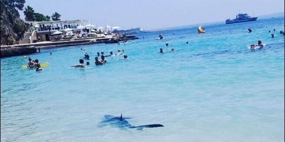 Tiburón en Mallorca