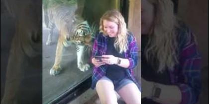 Tigre y embarazada