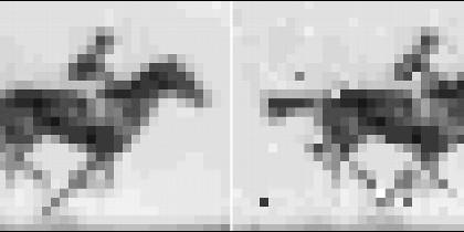 A la derecha, la imagen de la yegua recuperada por los científicos después de ser almacenada en ADN bacteriano.