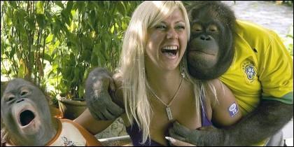 El orangutan agarra los senos de la turista.