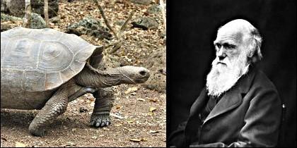 Darwin consideraba que las toryugas gigantes eran «exquisitas».