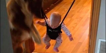 El bebé y el perro