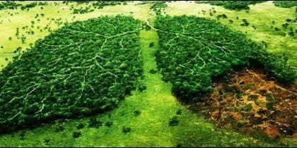Cuidar los 'pulmones' de la Tierra