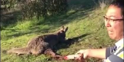 Hombre que degolló a un canguro
