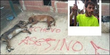 Los perros de Francisco Alcalá, alias «Cachobo», envenenados por animalistas.