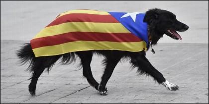 Un perro catalán, con la senyera independentista.