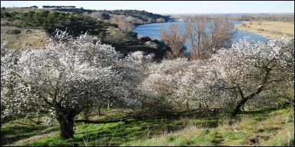 Imagen del Parque de las Riberas de Castronuño