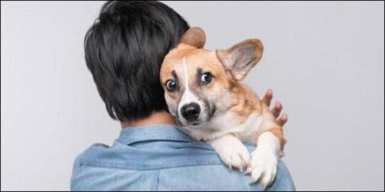Un perro como mascota.