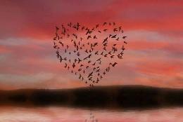 Amor y libertad