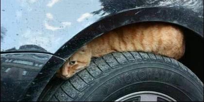 Un gato refugiado del frío encima de la rueda del coche.