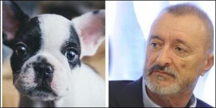 Arturo Pérez-Reverte y los perros.
