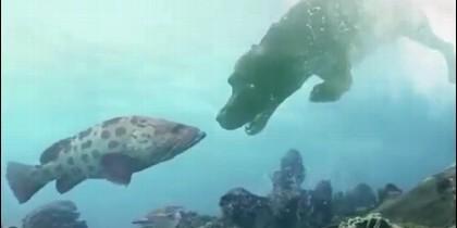 Un pez y un perro, en una misma piscina experimental