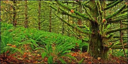 Selva, bosque, plantas.