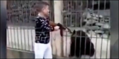 Mata a un oso
