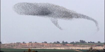 Una bandada de pájaros en pleno vuelo.