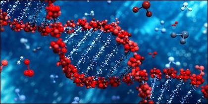 DNA y genes.