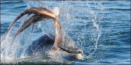El pulpo y el delfín
