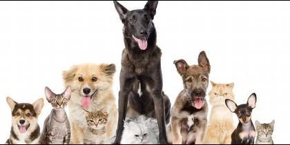Perros y gatos.