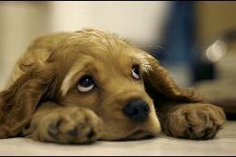 Mascotas: Un cachorro de perro.