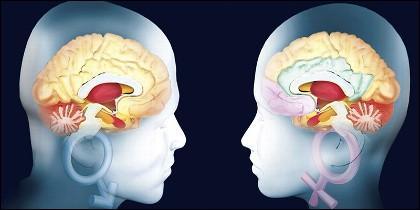 Cerebro, inteligencia y memoria.