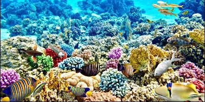 Peces en los arrecifes de coral.