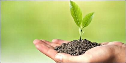 Semilla, tierra y planta.