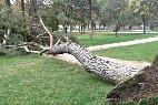 Árbol caído en el Retiro de Madrid.