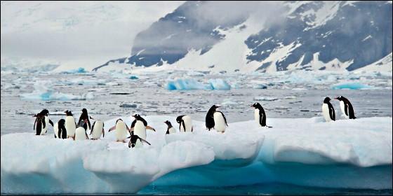 Pingüinos en la helada Antártida.