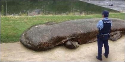 La salamandra gigante china.