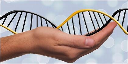 La protección legal de la genética