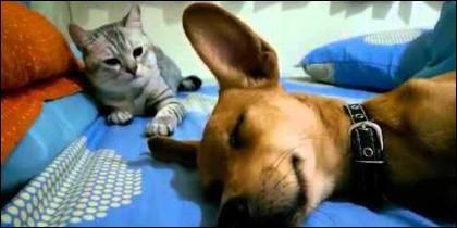El perro y el gato.