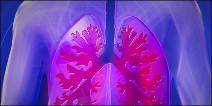 Células madre para regenerar pulmones