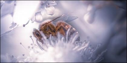 Los dones de las abejas
