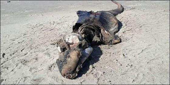 Aparece extraña criatura en playas del Reino Unido