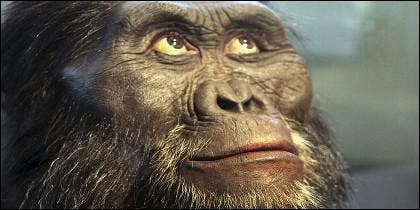 Australopitecos afarensis