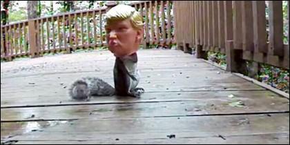 Ardilla y Trump