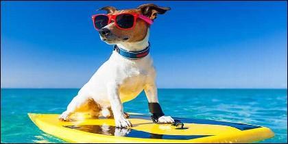 Mascotas, perro, playa y vacaciones.