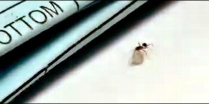 La hormiga robando un diamante