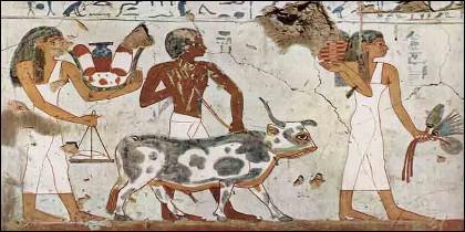 Alimentación, ganado y agricultura en el Antiguo Egipto.