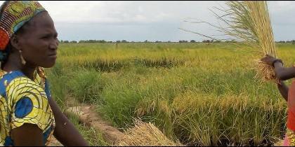 Manos Unidas colabora en proyectos de cooperativas en Chad
