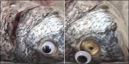 Kuwait: La trampa del ojo de plastico para simular que el pescado está fresco.